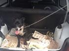 Cadela que mobilizou 25 agentes em resgate na Ponte é apelidada de 'Nina'