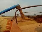 Produtividade e qualidade do trigo animam produtores do Paraná