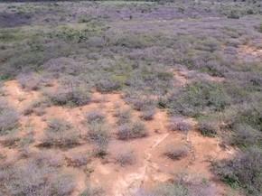 Vila da Ribeira, distrito de Cabaceiras, está em processo de desertificação, segundo o INSA (Foto: Reprodução/Lapis/INSA)