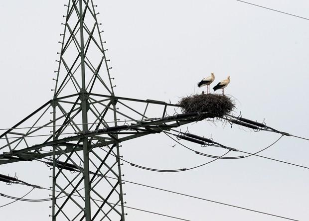 Ninho das cegonhas foi construído em torre de eletricidade em Freiburg, na Alemanha (Foto: Patrick Seeger/AFP)
