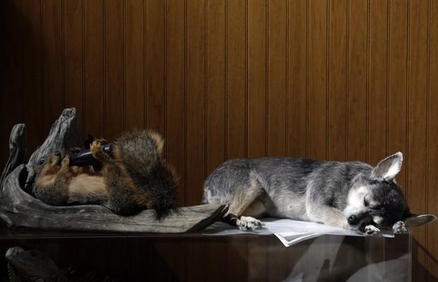 Donos de animais de estimação nos EUA têm procurado um serviço para preservar os bichos depois que eles morrem. O processo pode levar até um ano para ser concluído e envolve a desidratação do corpo do pet, em um método conhecido como 'freeze-drying', afirmam agências internacionais (Foto: Jeff Roberson/AP)