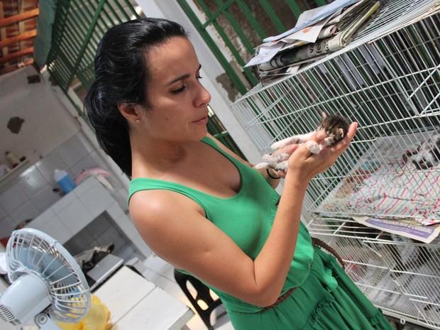 Vice-presidente da Apipa, Daniela Ramos, conta que gatos são os animais mais abandonados (Foto: Patrícia Andrade/G1)