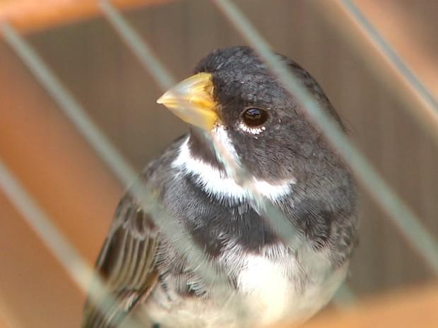 Aves foram apreendidas por falta de registro no Ibama (Foto: Maurício Glauco/EPTV)