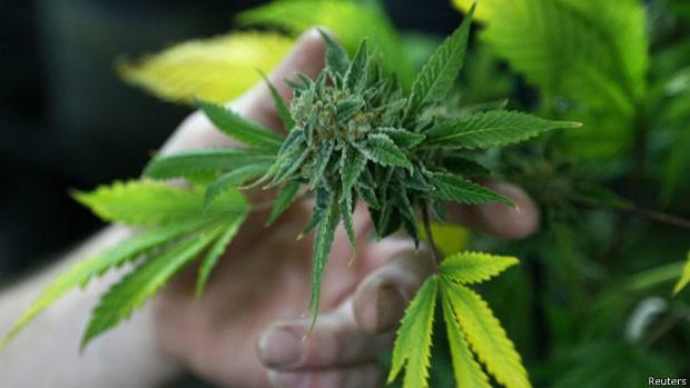 Para analistas, legalização de maconha em Estados dos EUA e no Uruguai retrata mudança de atitude no hemisfério (Foto: Reuters)