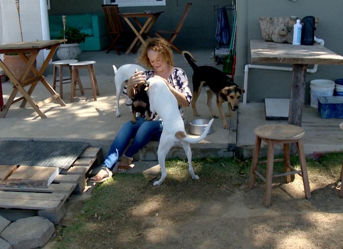 Os cachorros na casa da Tabatha, em Linhares  (Foto: Reprodução / TV Gazeta ES)