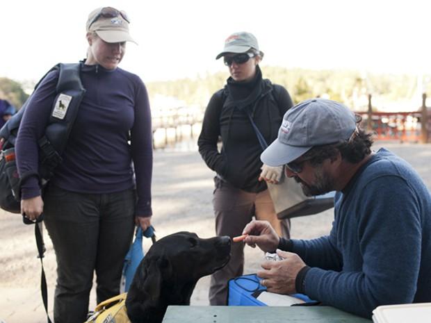 Cientista de projeto de pesquisa dá comida para vira-lata