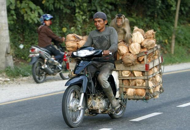Motociclista foi flagrado andando com uma moto superlotada de cocos (Foto: Tatan Syuflana/AP)