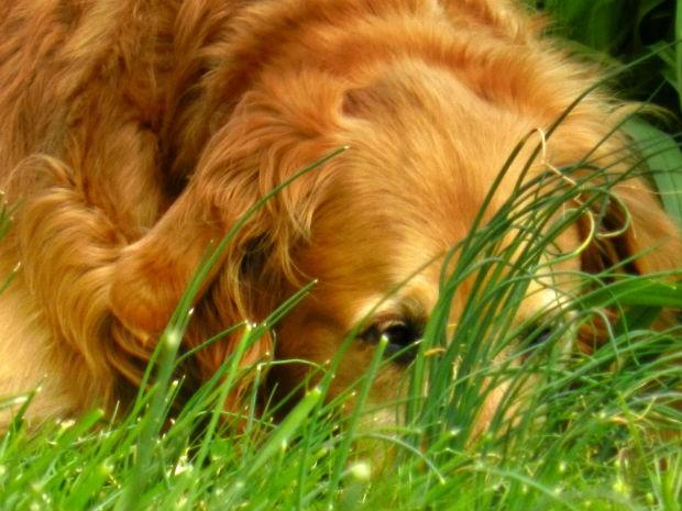 Animal contaminado apresenta perda de apetite, inatividade e fraqueza (Foto: Divulgação)