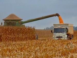 Colheita de milho em Mato Grosso 2 (Foto: Reprodução/TVCA)