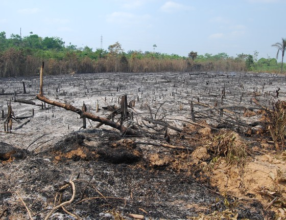 Floresta queimada na Amazônia (Foto: Erika Berenguer)