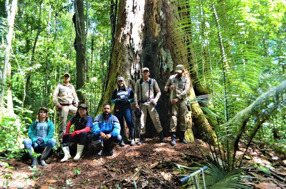 Equipe de amapaenses no pé da maior árvore da Amazônia  — Foto: Rafael Aleixo/Setec