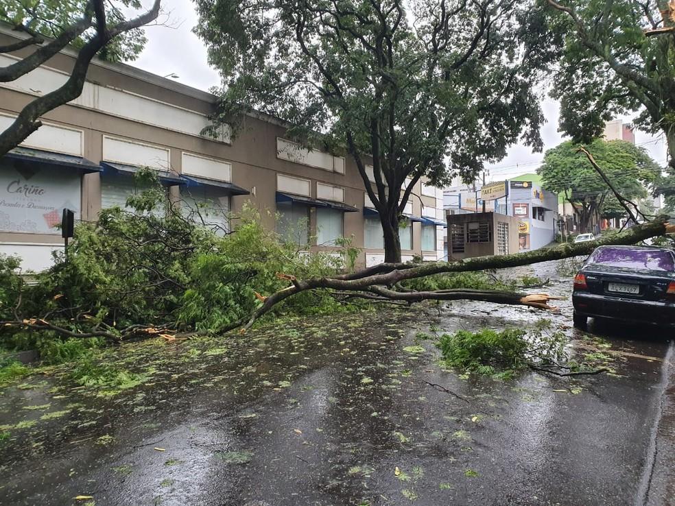 Em outro ponto da cidade, mais árvores caíram com a força do vento — Foto: Renan Gouveia/RPC Foz