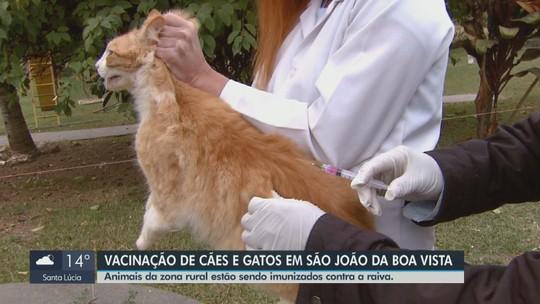 Campanha quer vacinar contra raiva 4 mil animais na zona rural de São João da Boa Vista; locais