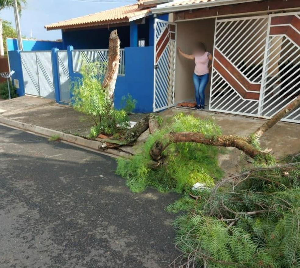 Vendaval causa queda de árvores e estragos em bairros de Boituva — Foto: Divulgação
