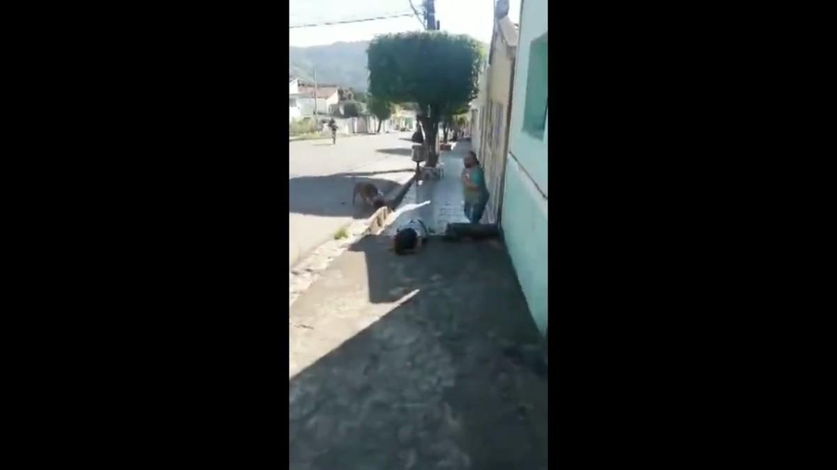 VÍDEO: Pitbull solto na rua ataca e mata cachorro pequeno em Palmeira dos Índios, AL