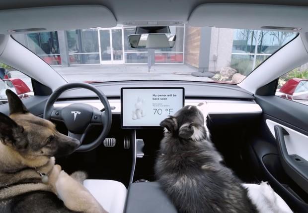 Dog Mode, lançado pela Tesla (Foto: Reprodução/Youtube)