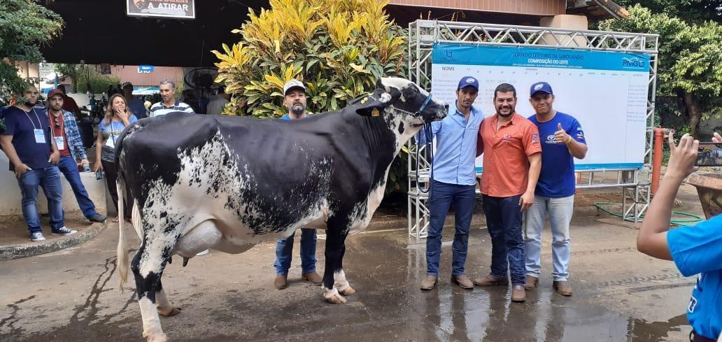 Vaca-Ametista-campeã-torneio-leiteiro-girolando (Foto: Divulgação)