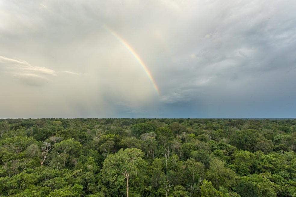 Árco-íris na floresta da bacia do Xingu pouco antes de chover — Foto: Carolina Dantas/G1