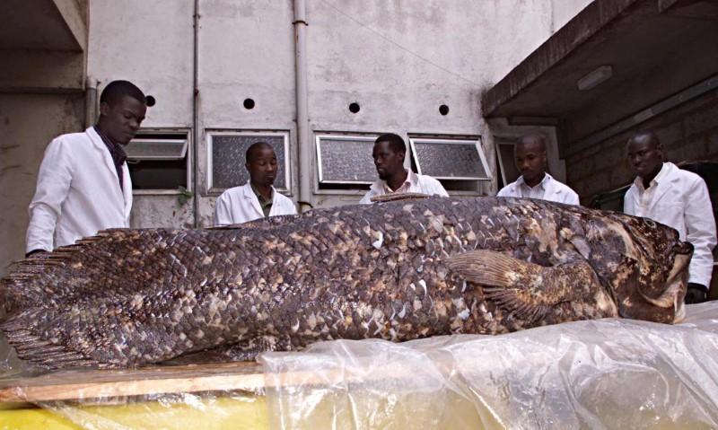 Espécie de peixe que já foi considerada extinta com os dinossauros pode viver por 100 anos e ainda está na Terra thumbnail