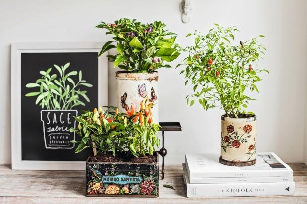 Aproveite caixas e latas antigas para plantar pimenteiros. Estas são da Acervo Brutto. Enfeitam a bancada da sala e espantam o mau-olhado (Foto: Elisa Correa / Editora Globo)