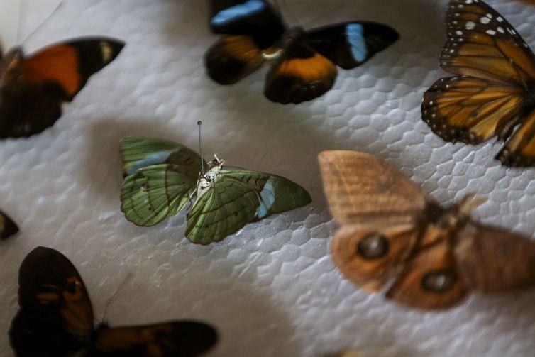 acervo insetos coleção (Foto: Marcelo Camargo/Agência Brasil)