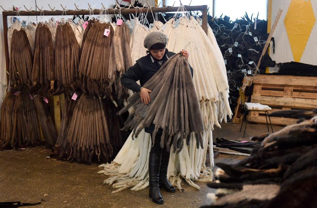 BREST REGION, BELARUS - JANUARY 9, 2019: Mink pelts at the Pinsk Fur Farm of the Belcoopsoyuz consumer cooperative society in the village of Malotkavichy, Brest Region. Viktor Drachev/TASS (Photo by Viktor Drachev\TASS via Getty Images) (Foto: Viktor Drachev/TASS)