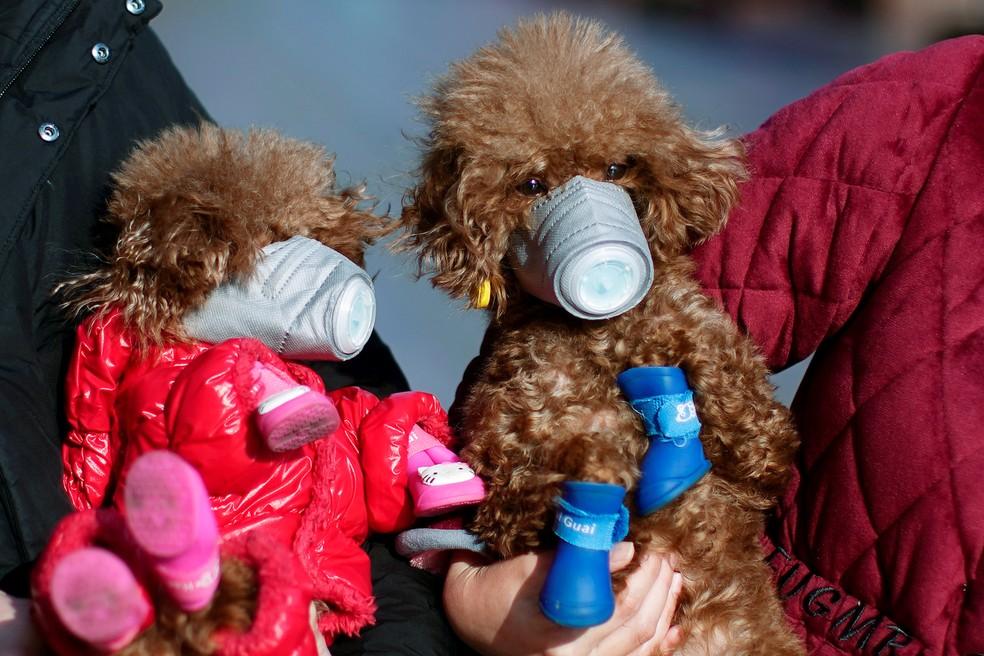 Resultado de imagem para Teste detecta coronavírus em cachorro em Hong Kong; novos exames serão feitos
