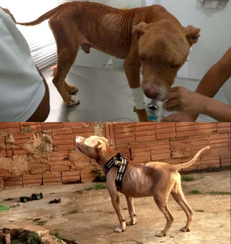Cão resgatado pela polícia infestado de carrapatos ganha novo lar em Lins - Noticias