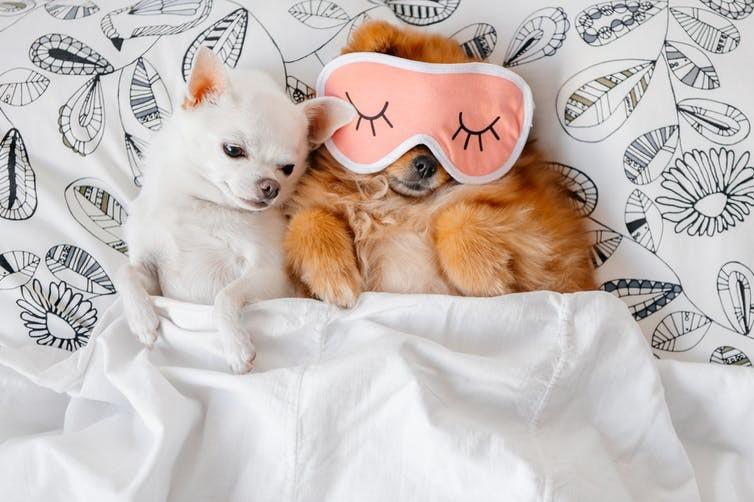 Comer e beber para dormir melhor significa mais do que apenas evitar a cafeína (Foto: The Conversation / Shutterstock)