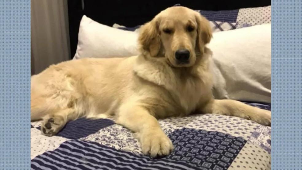 Mel estava no banco traseiro e, de acordo com a família, os bandidos não deram chance de retirar a cachorra — Foto: Reprodução/ Redes sociais
