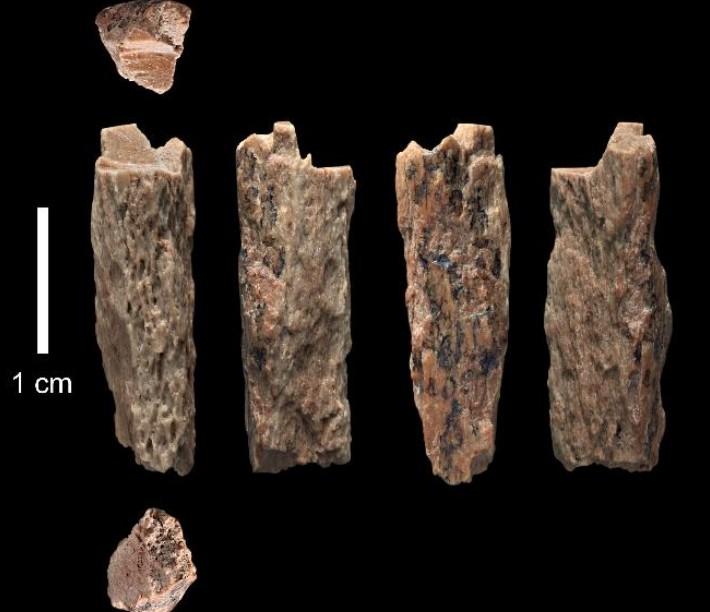 Ossos de Denisova 11, uma garota de 13 anos que viveu há 50 mil anos (Foto: Instituto Max Planck)