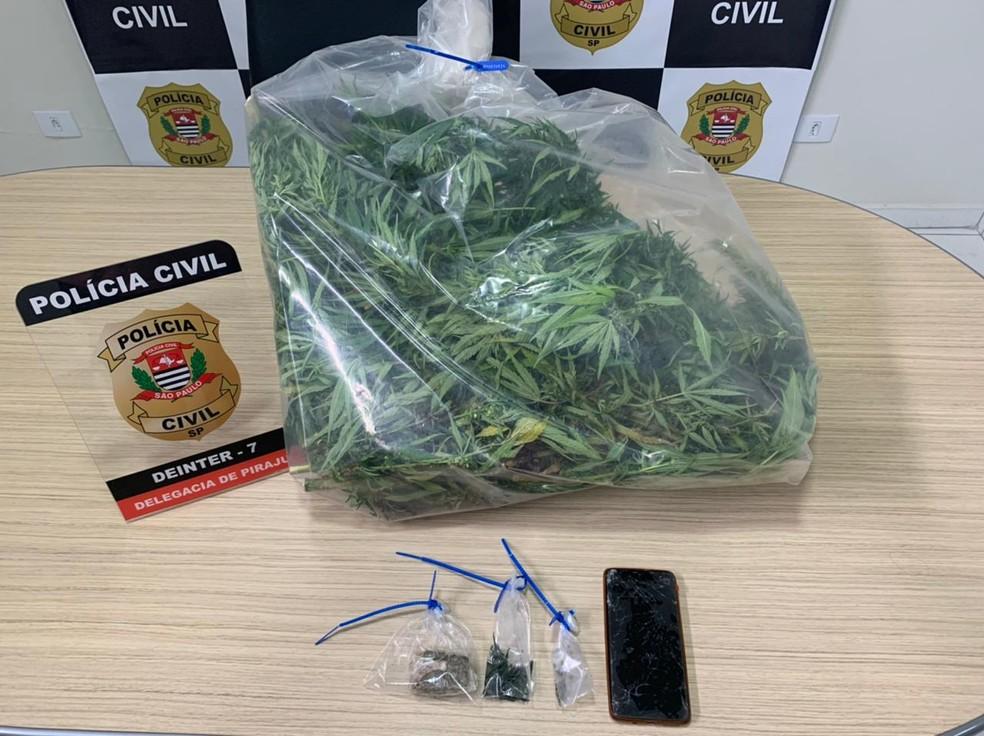 Polícia Civil apreendeu vasos, tabletes e folhas secas de maconha em Piraju (SP) — Foto: Polícia Civil/Divulgação