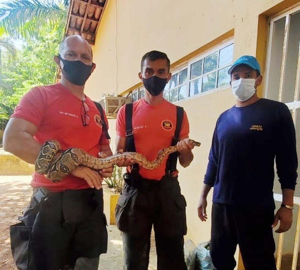 Cobra jiboia foi resgatada pelo Corpo de Bombeiros, em Natal — Foto: CBM/Cedida