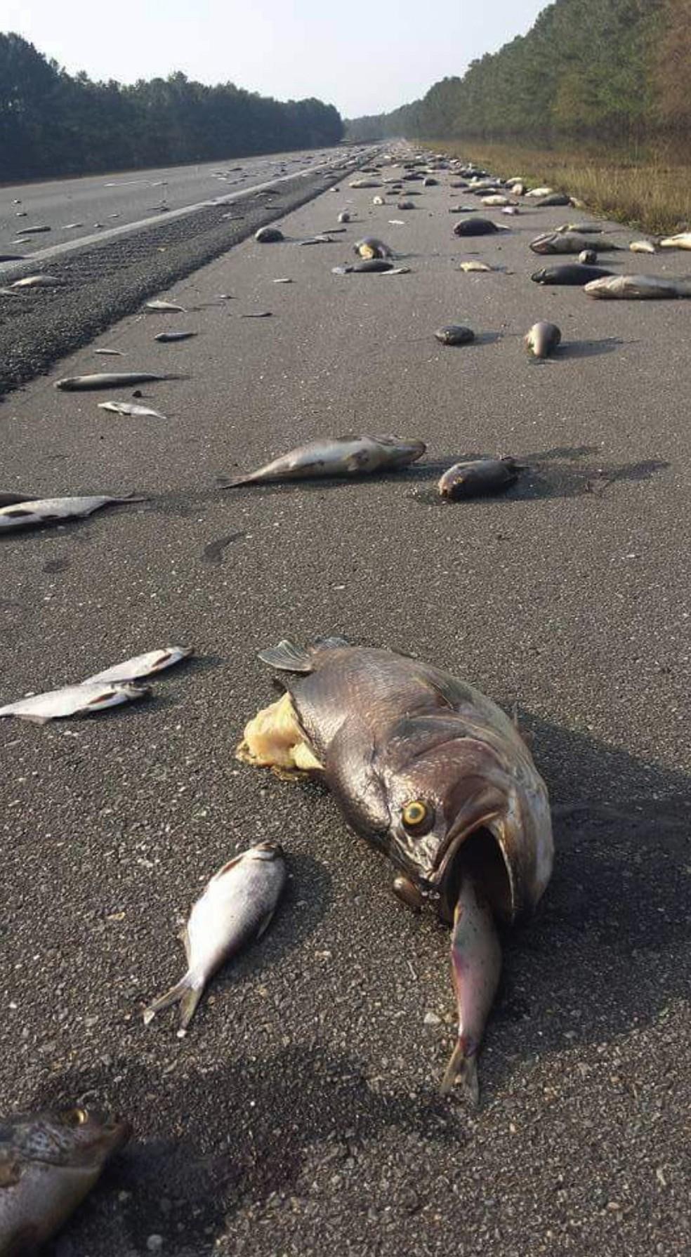 Peixes mortos são vistos em estrada na Carolina do Norte após inundações causadas pelo furacão Florence — Foto: Jeff Garrett/N.C. Department of Transportation via AP