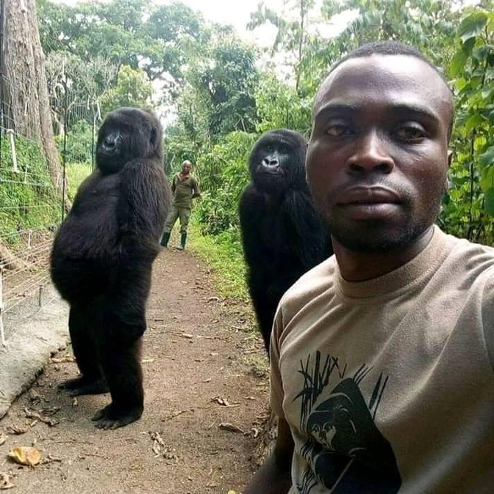 Ndeze (esquerda) e Ndakasi (direita): gorilas posam com o guarda que os resgatou quando eram bebês. — Foto: Mathieu Shamavi / Reprodução