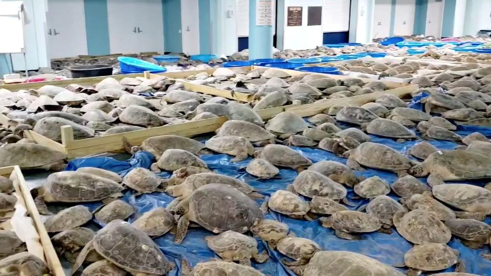 Imagem de centro de convenções com tartarugas marinhas da costa do Texas, em 17 de fevereiro de 2021 — Foto: Ed Caum/Divulgação/Via Reuters