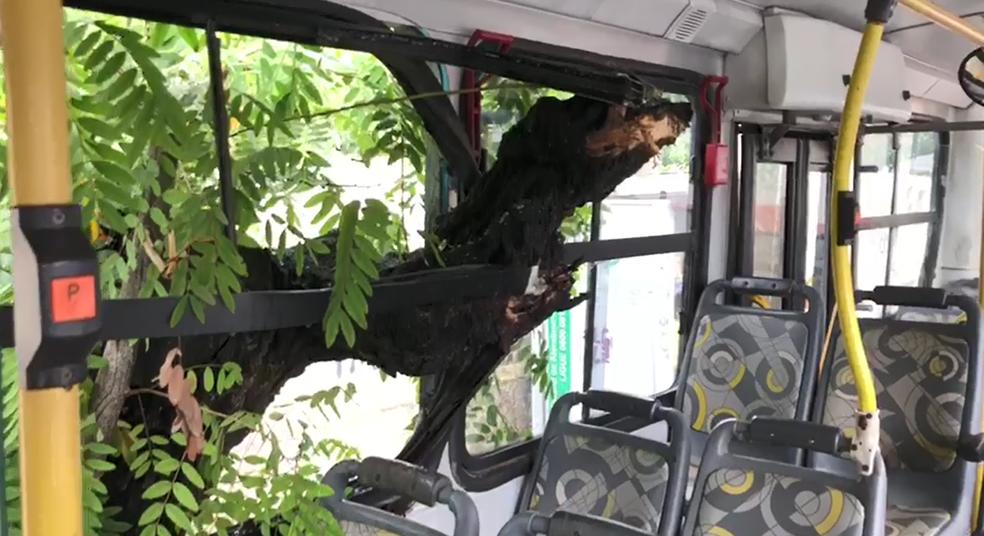 Árvore atinge ônibus na Avenida Dezessete de Agosto, na Zona Norte do Recife (Foto: Reprodução/WhatsApp)