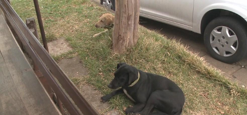 Cães ficam em frente a hospital em Xanxerê após dona ser internada — Foto: Reprodução/NSC TV
