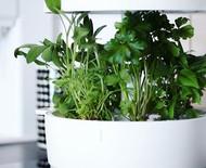 5 mini hortas autônomas e tecnológicas que demandam poucos cuidados