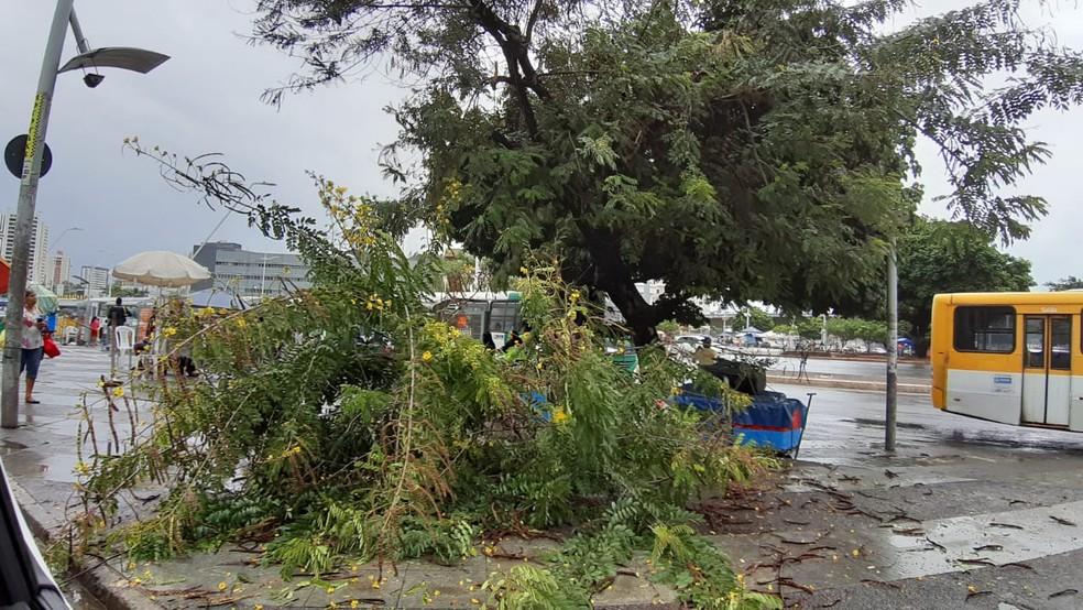 Árvore caiu nesta segunda-feira (8), em dia chuvoso e de ventos fortes em Salvador  — Foto: Rafael Marques/TV Bahia