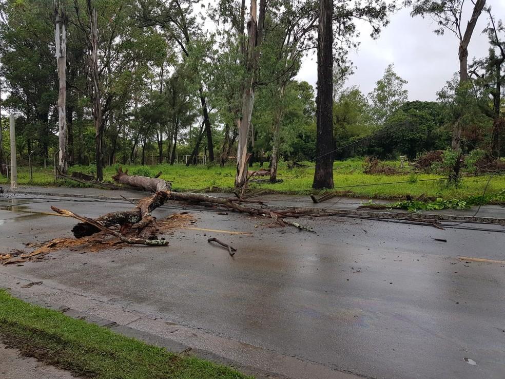 Árvore caiu após forte chuva na Avenida Antônio Francisco Lisboa, na Região da Pampulha, em BH. — Foto: Flávia Cristini/TV Globo