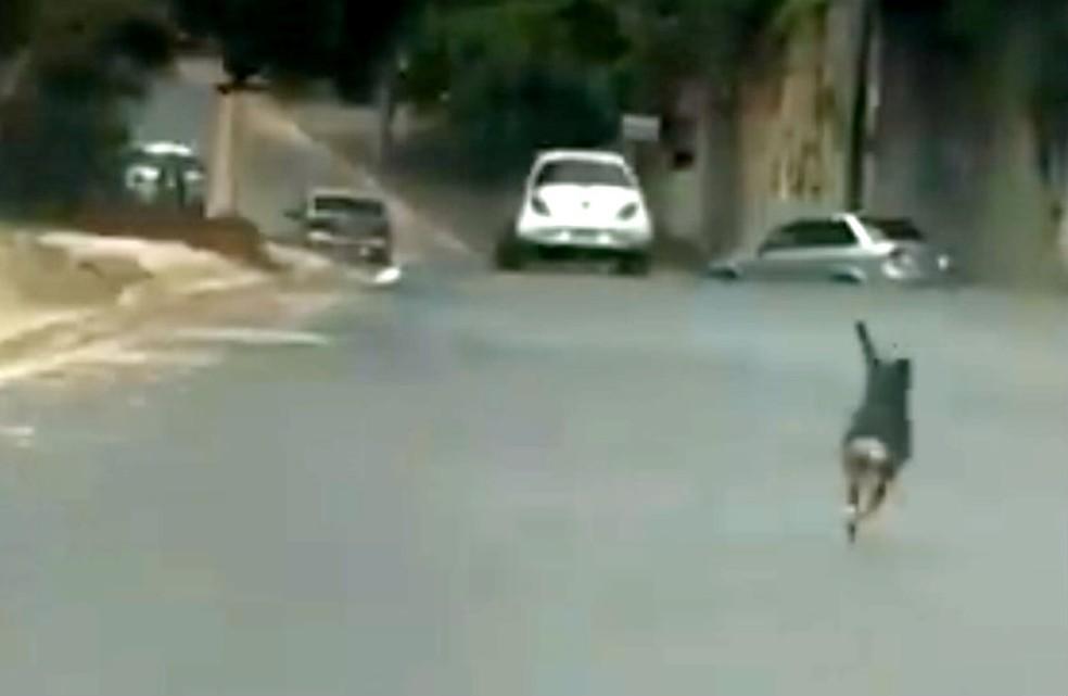 Vídeo mostra suposto abandono de cão em rua de Bauru (Foto: Facebook/Reprodução)