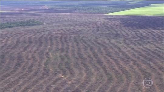 Desmatamento na Amazônia atinge uma área de 97 mil campos de futebol