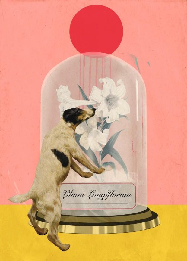 Ilustração coluna A vida com pets - maio de 2018 (Foto: Ilustração Laurindo Feliciano / Editora Globo)