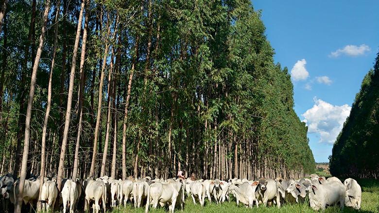 Estudo mostra que expansão dos planos ABC e Planaveg pode ser  solução para agro se adaptar às mudanças climáticas (Foto: Cristiano Borges/ Ed. Globo;)