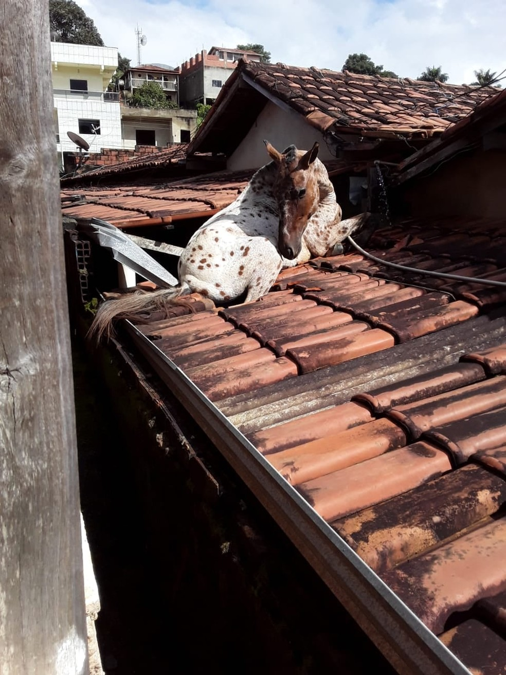 Cavalo caiu no telhado da prefeitura de Aricanduva — Foto: Prefeitura de Aricanduva