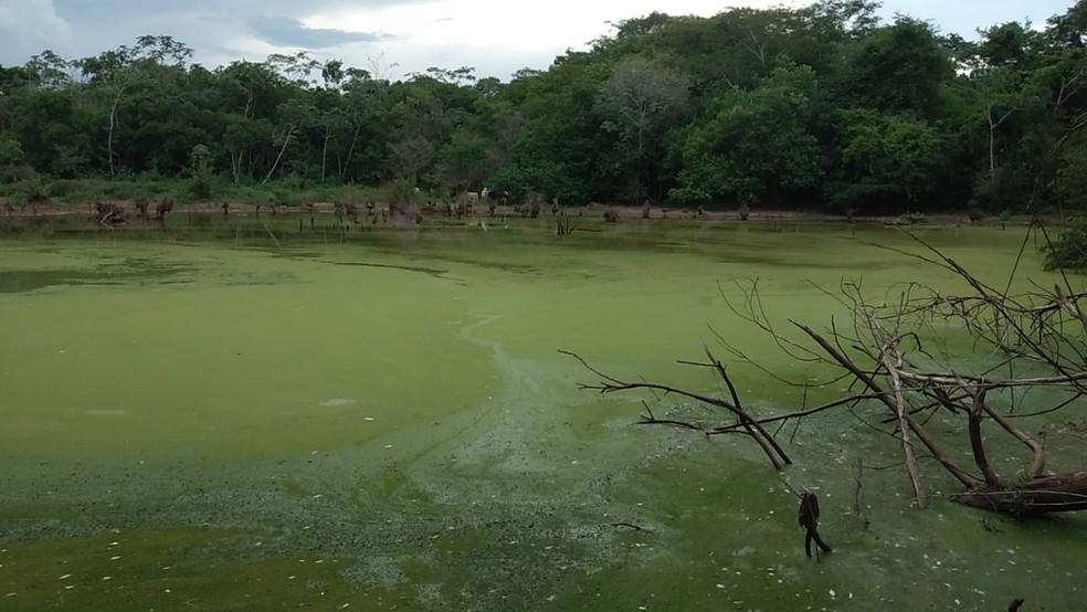 Resto das produções ilegais era descartado numa lagoa onde a PM encontrou peixes mortos — Foto: Polícia Militar de Mato Grosso
