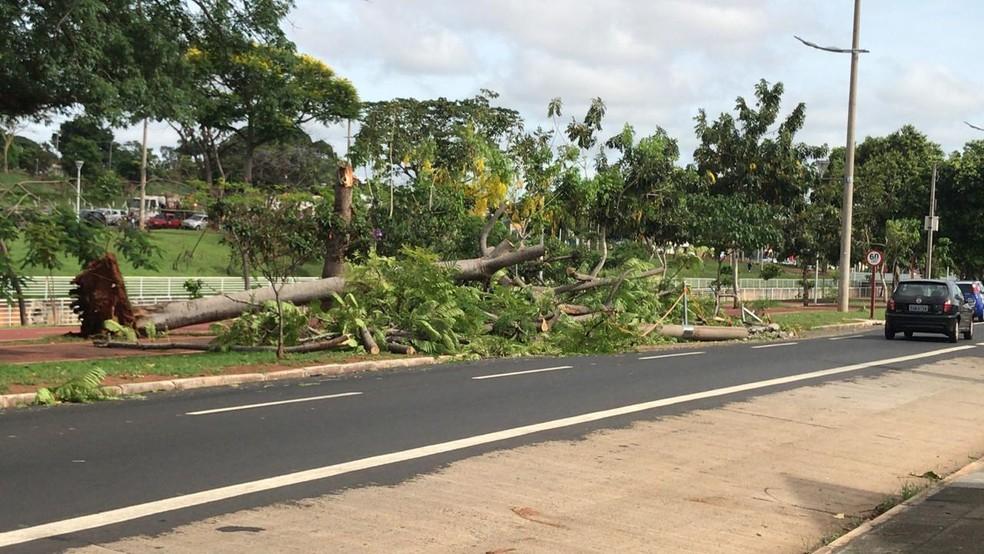 Árvore foi arrancada com a força do vento em Rio Preto — Foto: Gridânia Brait/TV TEM