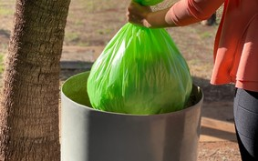 Empresa brasileira produz saco de lixo feito de planta