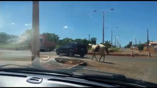 Motorista é filmado arrastando cavalo amarrado a carro, em Luziânia